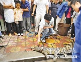 餐馆在幼儿园旁砍杀叫卖鳄鱼引非议(图)