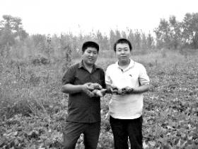 法学毕业生转干农业活 网上卖光20万斤七彩甘薯