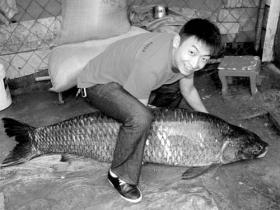 打鱼者捕获一条154斤重青鱼(组图)