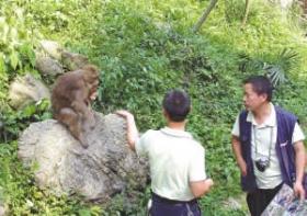 老太被峨眉山野猴蹬下深沟致残状告景区