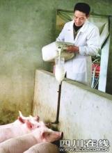 男子用牛奶喂猪 每斤猪肉卖60元以上(组图)