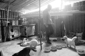 失业女工花光数万元积蓄收养近50只流浪猫(图)