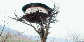 农夫树上筑房一住20年 不为看园只为生活