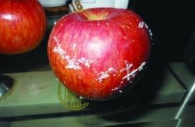 网友曝五个苹果刮出半斤蜡引热议