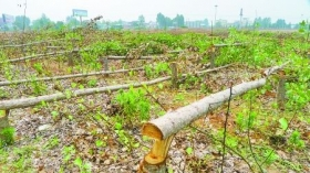 村民致电领导举报毁林后遭暴打骨折