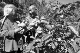 七旬老夫妇垦荒植树20年 称为子孙留座绿山(图